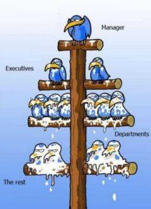 Ce gust are fundul de patron? 2