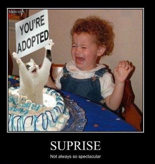 Copil adoptat, returnat precum... 15